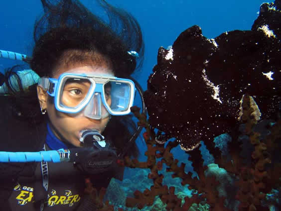 Daisy with Black Frogfish
